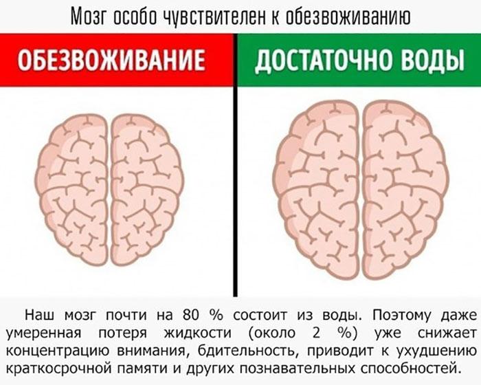 Как вода влияет на мозг