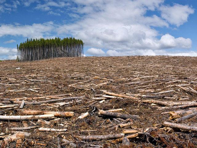 8 печальных последствий, с которыми человечество столкнется из-за вырубки лесов