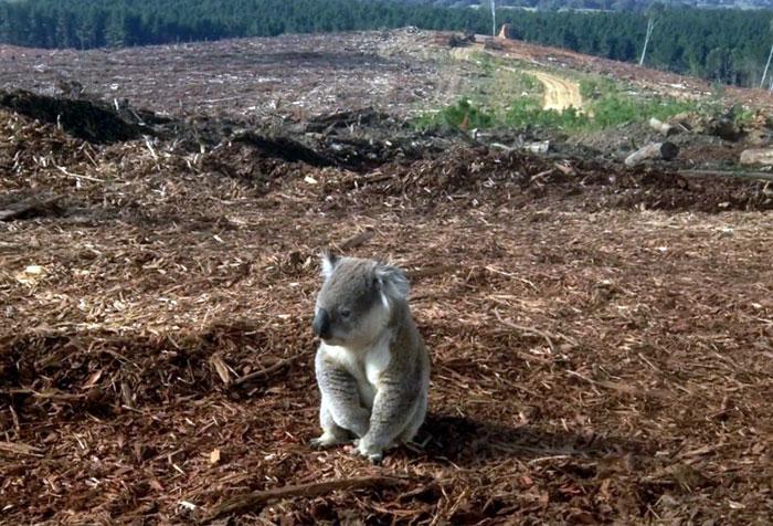 Сокращение биологического разнообразия из за вырубки лесов